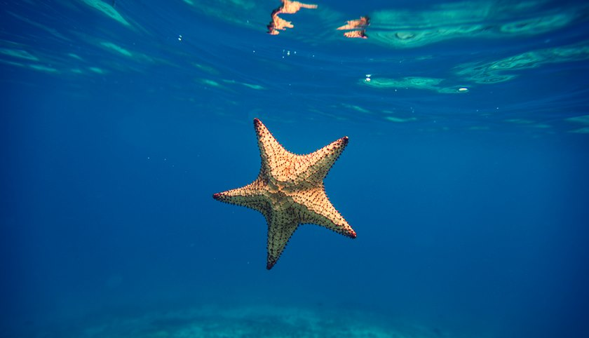 estrella-de-mar-picaduras-de-animales-marinos-2081888-7201850-jpg-6039591